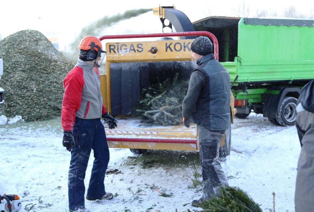 Egļu šķeldošanas process. Kas notiek ar Ziemassvētku eglēm pēc svētkiem.
