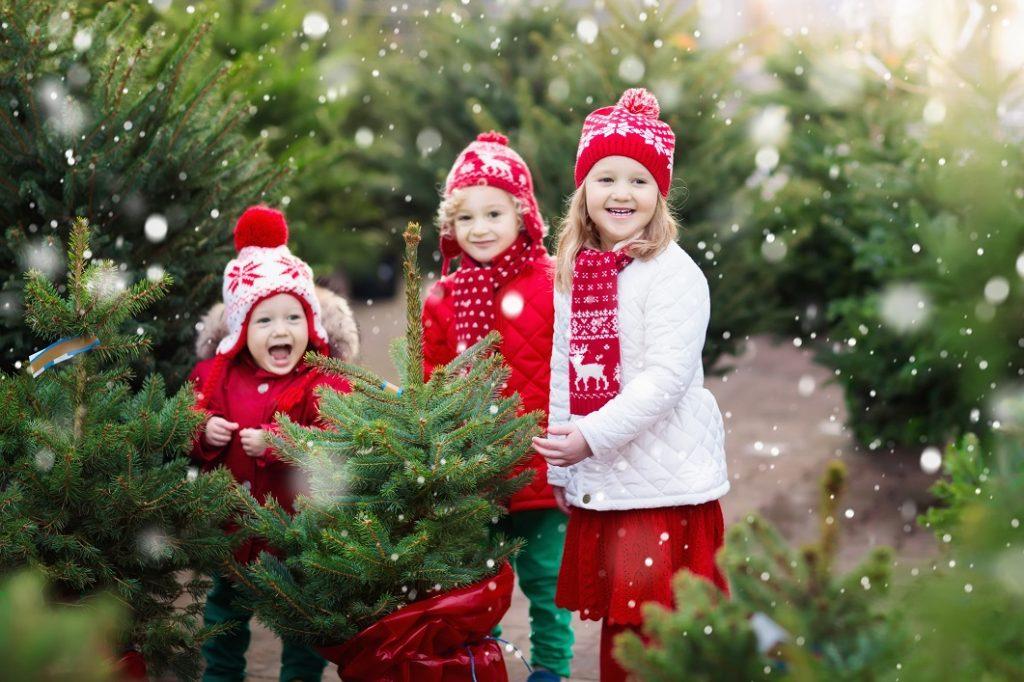 Bērni izvēlas Ziemassvētku egli. Ziemassvētku egļu tirdziņš. Egļu tirdzniecības vieta. Ziemassvētku egles. Egle podiņā.