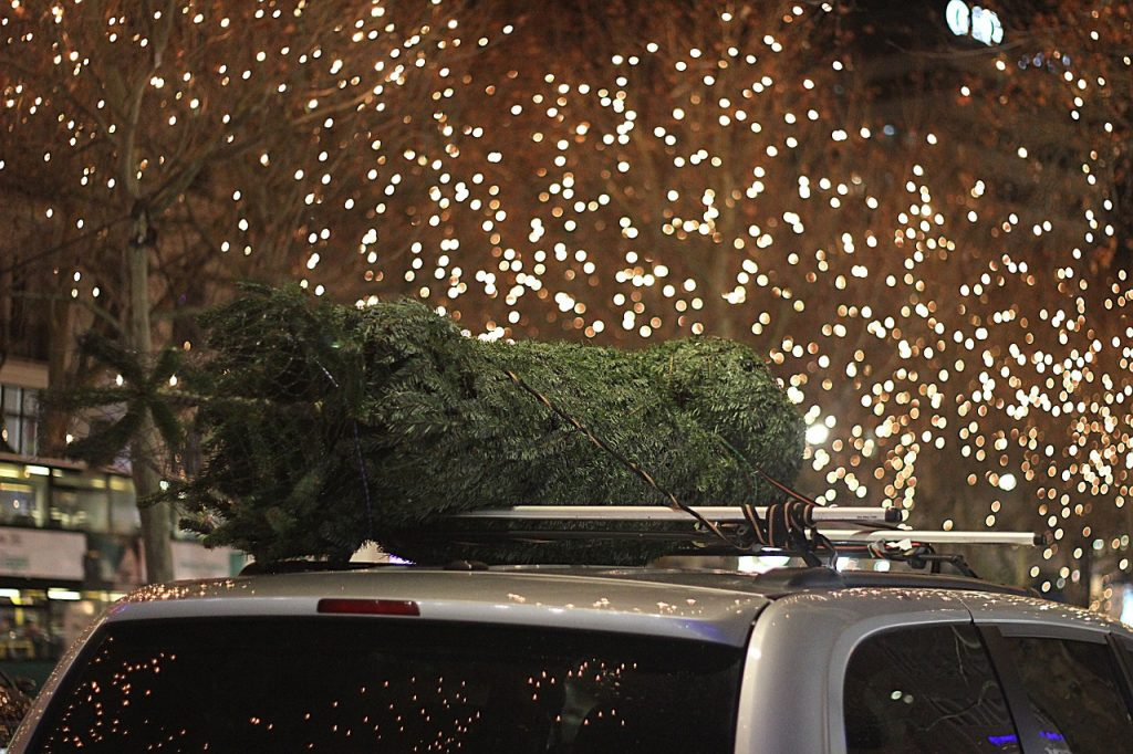 Ziemassvētku egle uz sudrabkrāsas auto jumta, fonā mirdzošas svētku lampiņas, egles izvešana