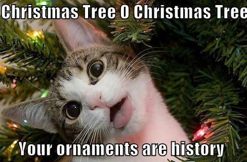 Kaķis Ziemassvētku egles zaros