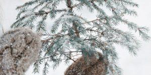 Rokas ar dūraiņiem tur mazu, nekuplu eglīti uz balta sniega fona