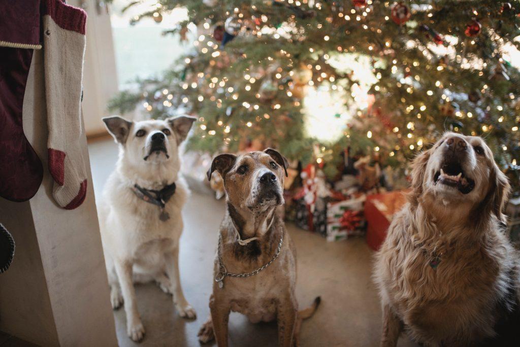 Trīs sēdoši suņi, fonā Ziemassvētku egle