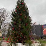 Ar tumši sarkanām dekorācijām rotāta liela Latvijas egle Valmierā pie t/c Valleta