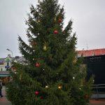 Liela, kupla Latvijas egle