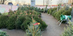 Ziemassvētku egļu tirdzniecības vieta ar izkārtotām Ziemassvētku eglēm
